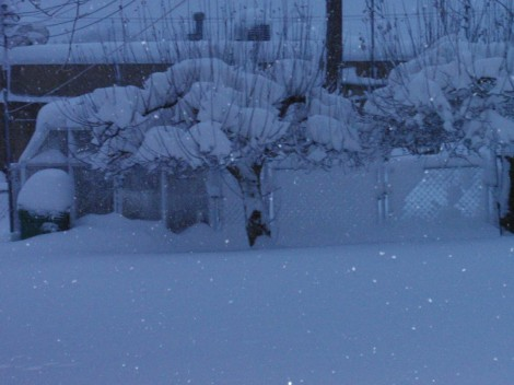 snow-1-1024x768
