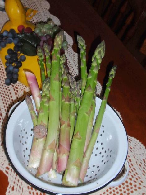 Asparagus1-1024x1365