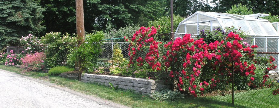 John\'s Garden Journal | Mostly Gardening and some general Bull S***